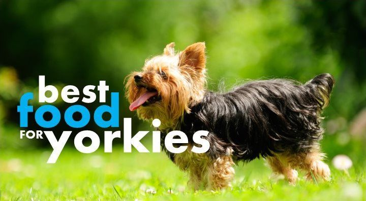 Best Dog Food For Yorkies Don T Malnourish Your Yorkie