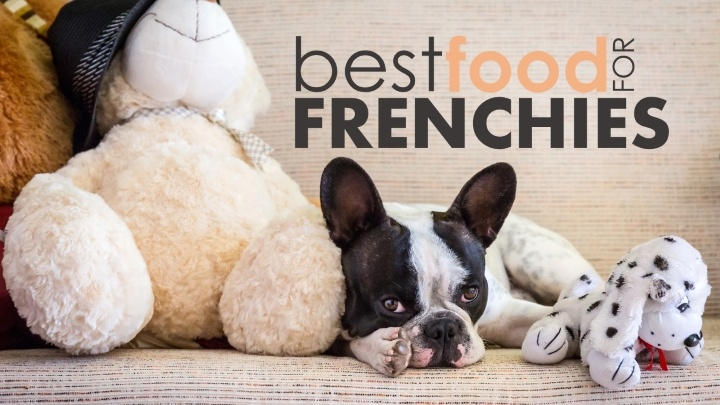 Best Food For French Bulldogs Help Your Frenchie Reach His Puppy