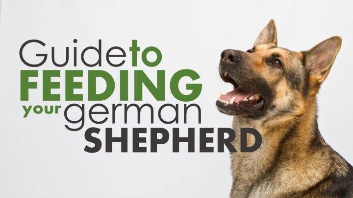 About german shepherd food