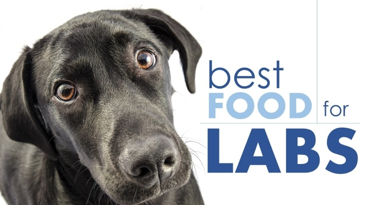 Best Dog Food For Labs >> Good Dog Food For Labs 4 Options For This Large Breed 2019