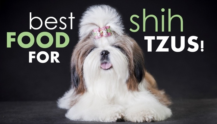 Best Dog Food For Shih Tzus How To Pick The Good Shih