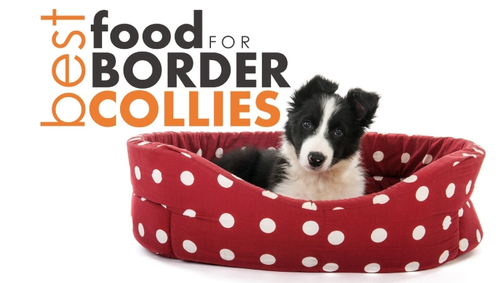 Food best dog food for border collies the best amp worst options