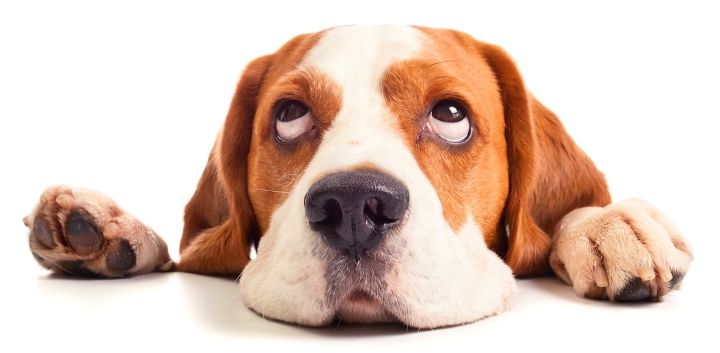 Dog Food That Is Good For The Liver