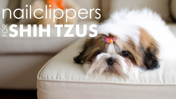 Best nail clippers for shih tzus