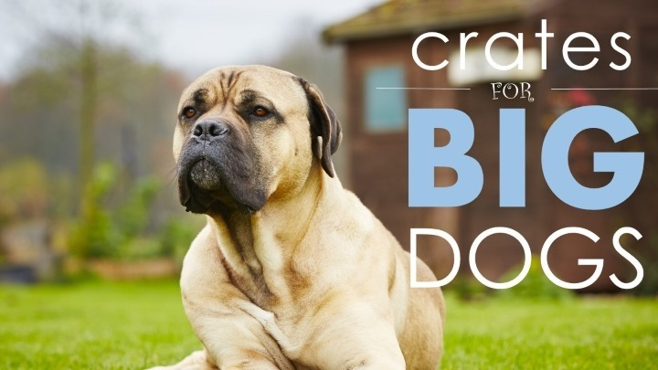 Best dog crates for large dogs 5 big comfy ones herepup for Best dogs for you