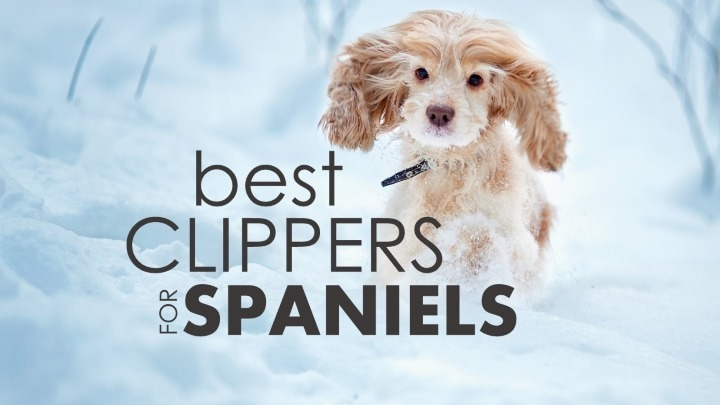 Best dog clippers for cocker spaniels