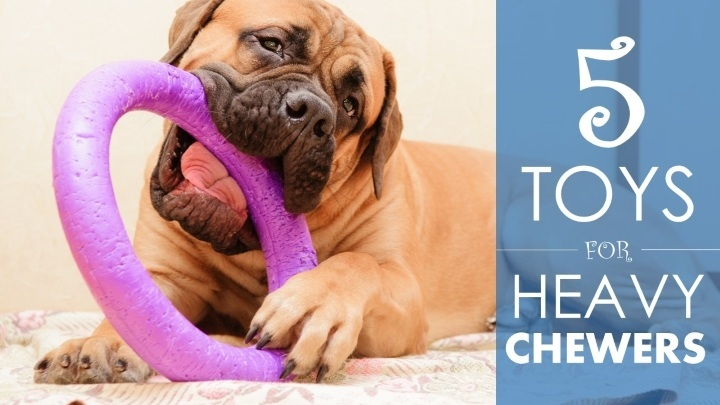 Best dog toys for heavy chewers