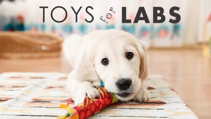 best dog toys for labs quality tough toys for bored labs