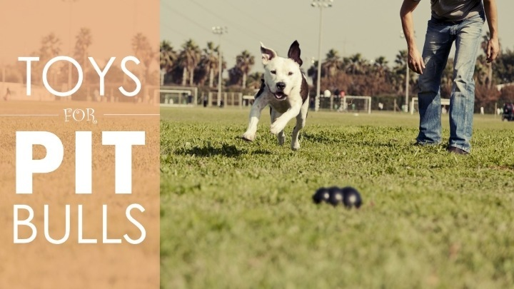 Best Dog Toys For Pit Bulls 5 Strong Toys Than Can Stand