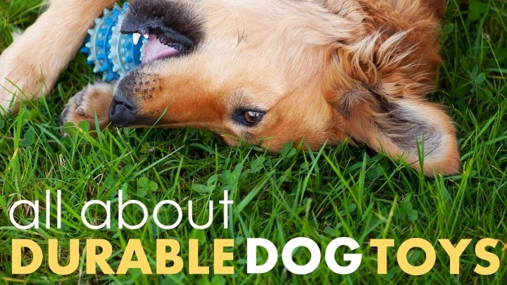 Best durable dog toys