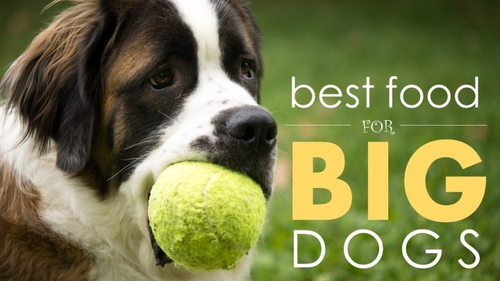 Best Dry Dog Food For Giant Breeds
