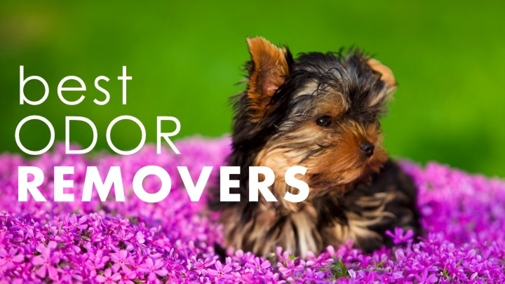 Best pet odor neutralizers