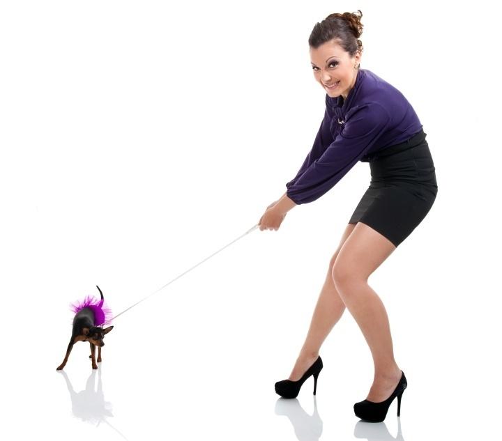 How Do Leash Train A Dog