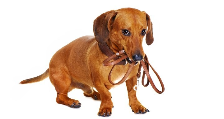 Leather dog leash reviews