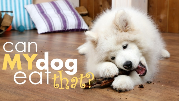 Are Bananas Good For Dogs 33 Foods Dogs Can Cant Eat