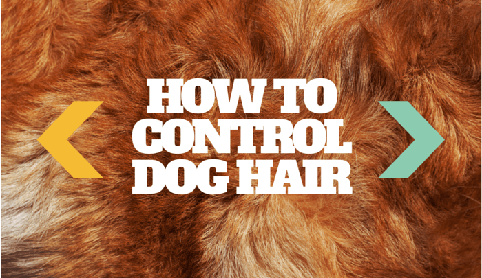 How to control dog hair
