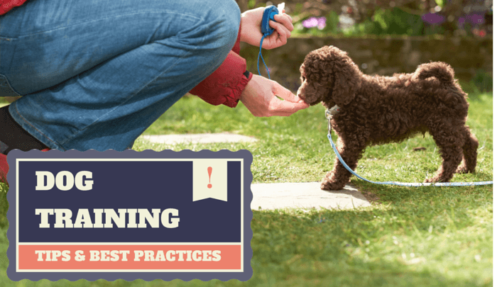 Dog training best practices