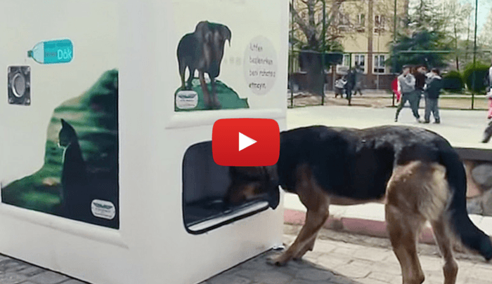 Dog food vending machine