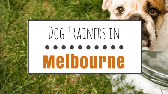 Dog Training in Melbourne FL