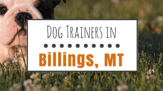 Dog Training in Billings MT