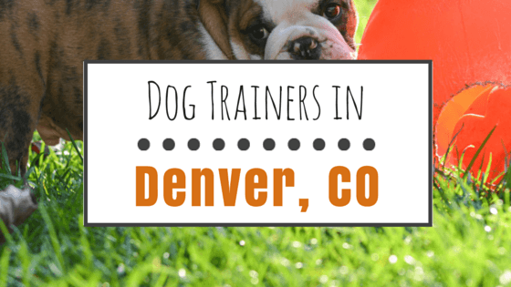 Dog Training in Denver CO