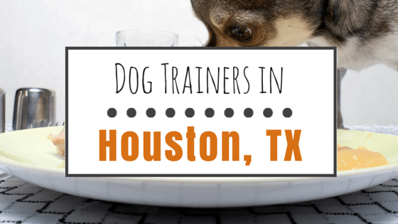 Dog Training in Houston TX