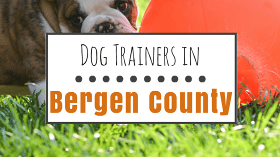 Dog Training in Bergen County, NJ