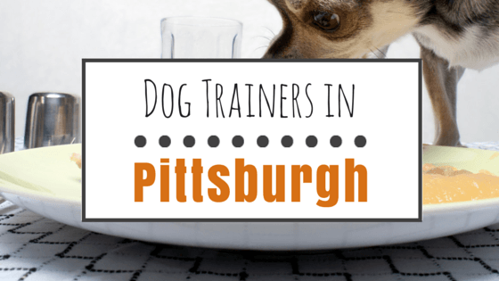 Dog Training in Pittsburgh PA