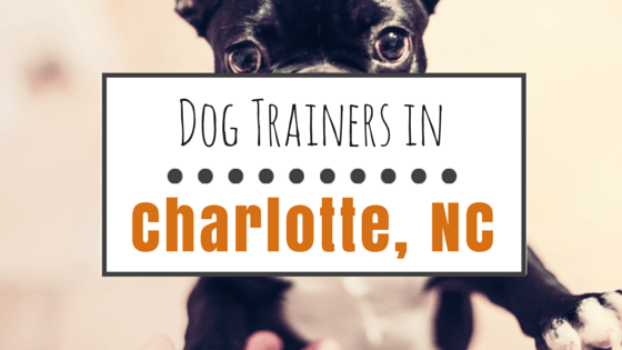 Dog Training in Charlotte NC