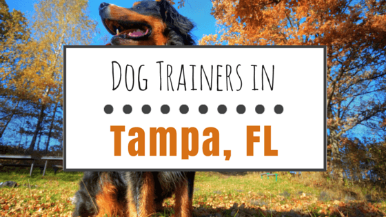 Dog Training in Tampa