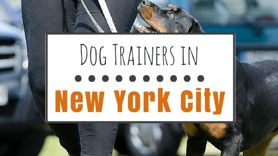 Dog Trainers in NYC