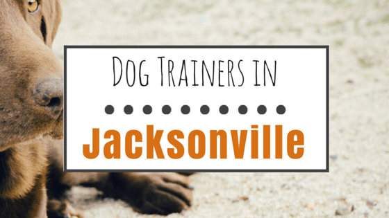 Dog Trainers in Jacksonville FL