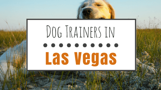 Dog Training in Las Vegas NV