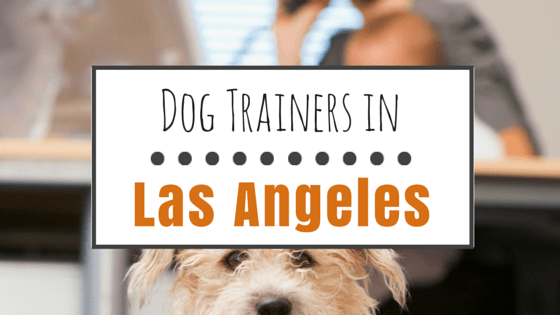 Dog training in Los Angeles CA