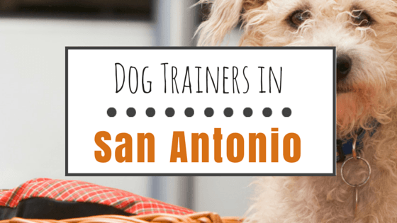 Dog Training in San Antonio