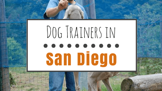 Dog trainers in San Diego