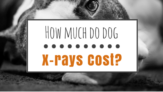 Dog x-ray cost