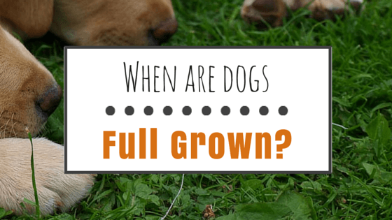 When are dogs full grown