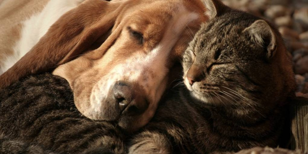 Best dogs for cuddling