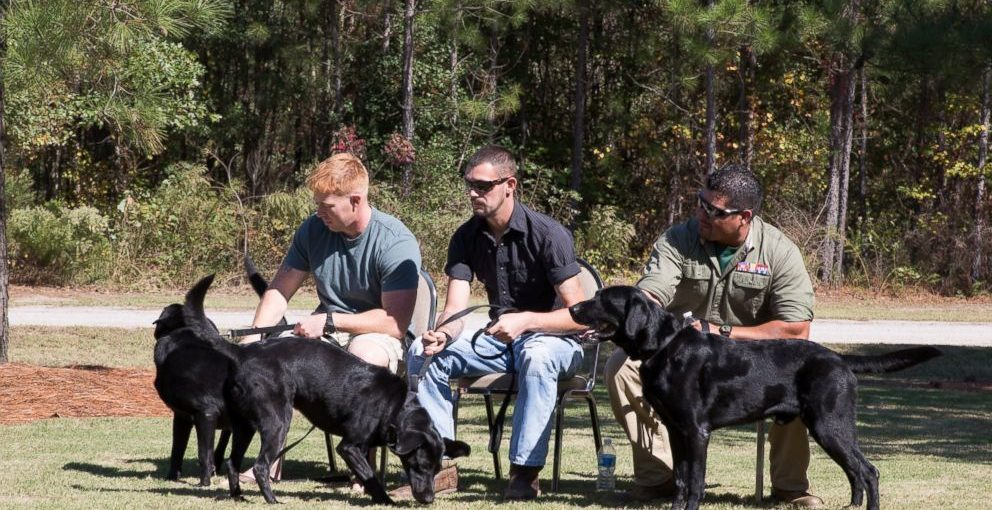 marines reunited with dogs