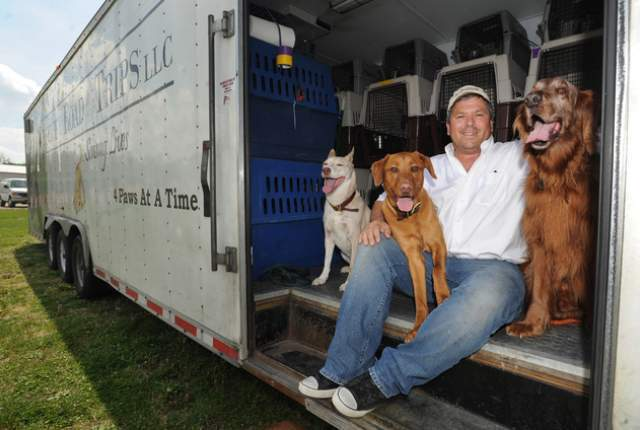 Man transports dogs up north