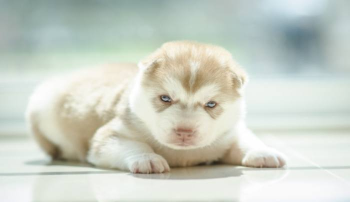 De Worming Puppies How To Handle In A Gentle Manner