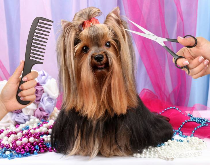 How To Cut A Dog S Hair With Clippers