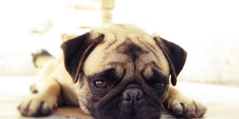 Dog Vomiting Water