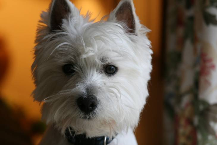 http://herepup.com/dog-training-in-las-vegas-nv/