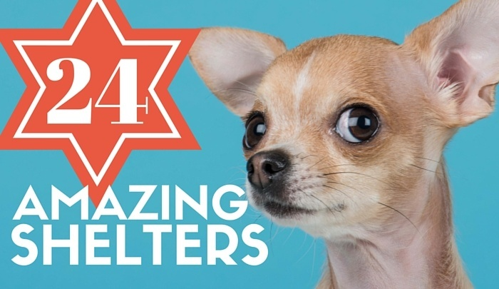 Best Dog Shelters 2016