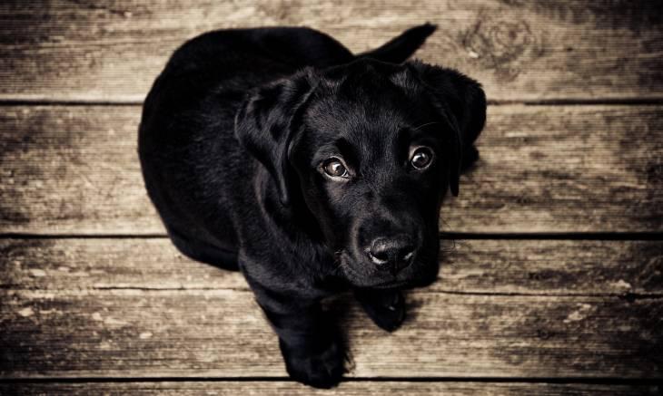 Autistic Dog 2