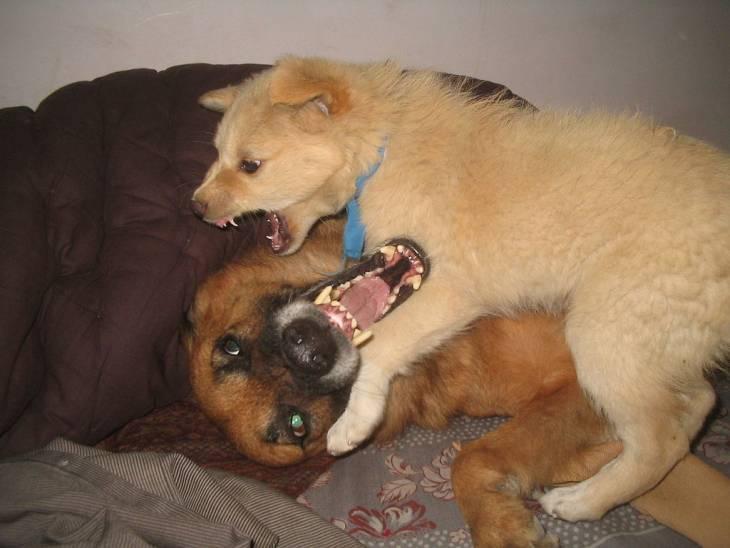 Dog Jealousy 2