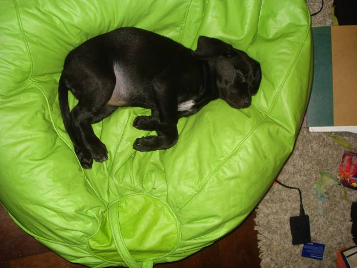 Dog Sleeping Positions 2