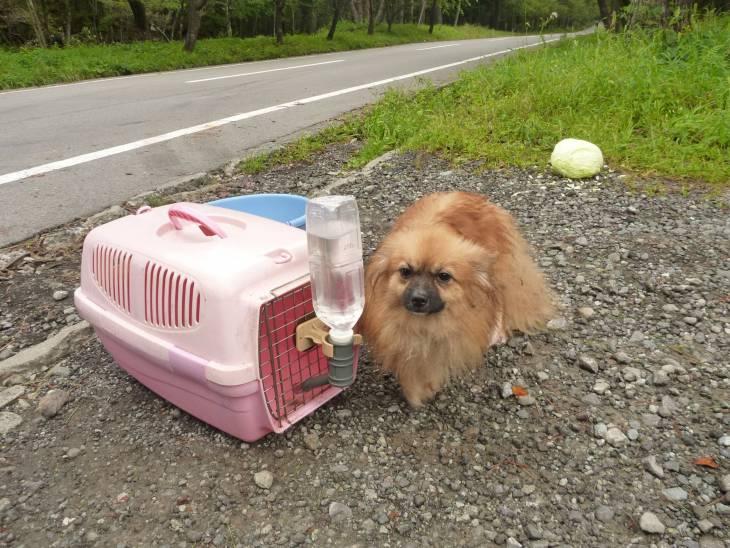 Gatorade pour chiens 2